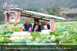 Foto India, Shikara nel Lago Dal, Srinagar, Kashmir