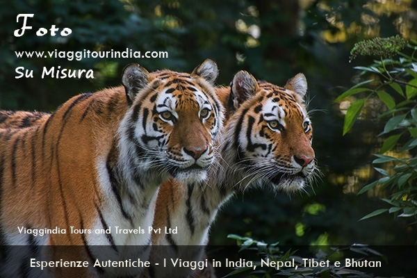 I Viaggi nei Parchi Nazionali in India Tour naturalistici e Jeep Safari: Delhi – Sawai Madhopur – Bandhavgarh – Kanha – Pench